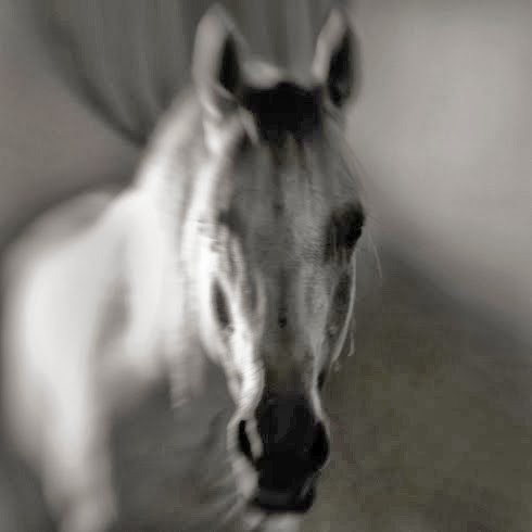 Horse in Shadow by Anne berry